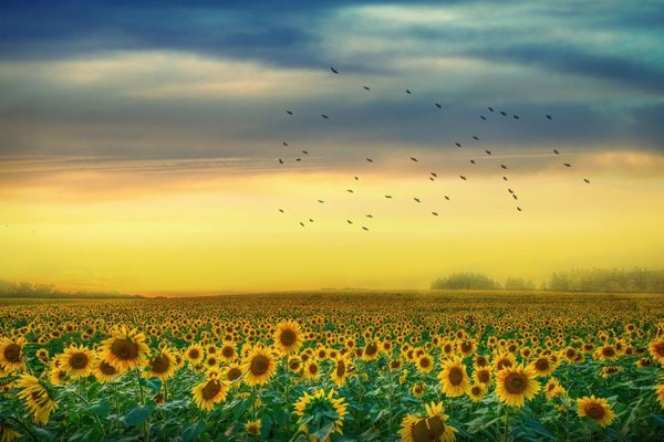 About - Bookings and Fees - Sunflower Field