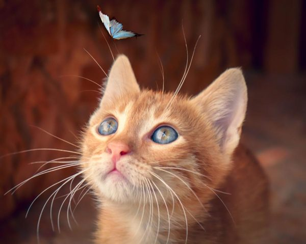About - Hypnotherapy - Cat and Butterfly